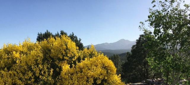 spanish-broom-mountain-view.jpg